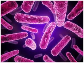 Funcionamiento antibióticos