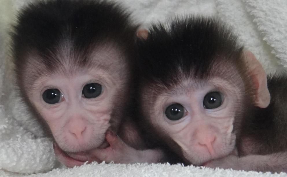 macacos_genetica