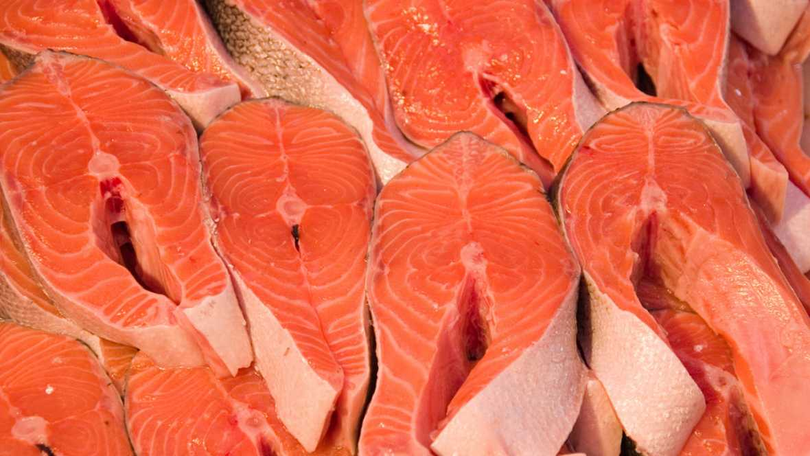 Comer salmón transgénico