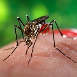 transmisión virus Zika