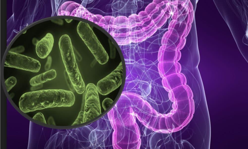 intestinal-microbiota-