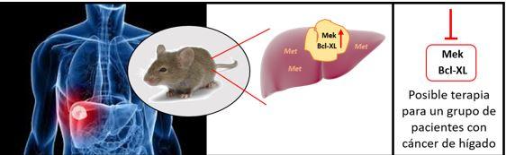 ratones-hígado